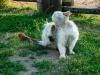 Comment se débarrasser des puces du chien ou du chat à la maison ?